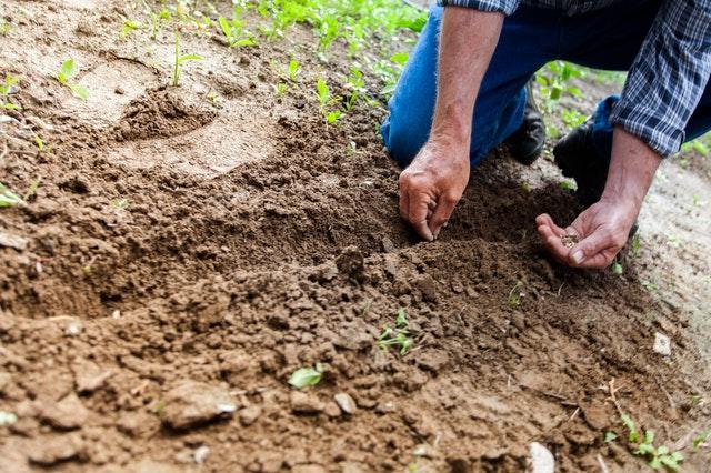 sázení semen